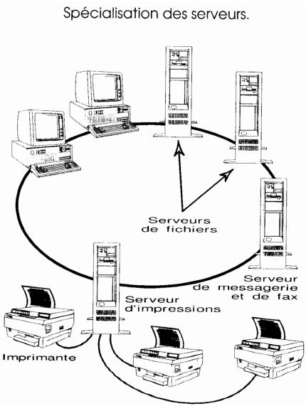 specialisation des serveurs dans un reseau informatique