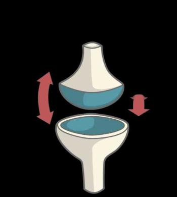 Articulation ellipsoide condylarthrose