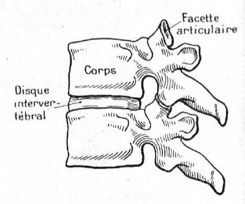 Disque intervertebral