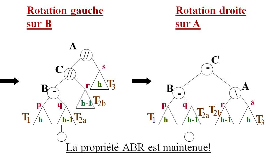Rotation gauche Rotation droite Arbres AVL: Insertion cours algorithmique