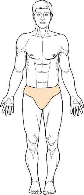Position de référence ou position anatomique standard
