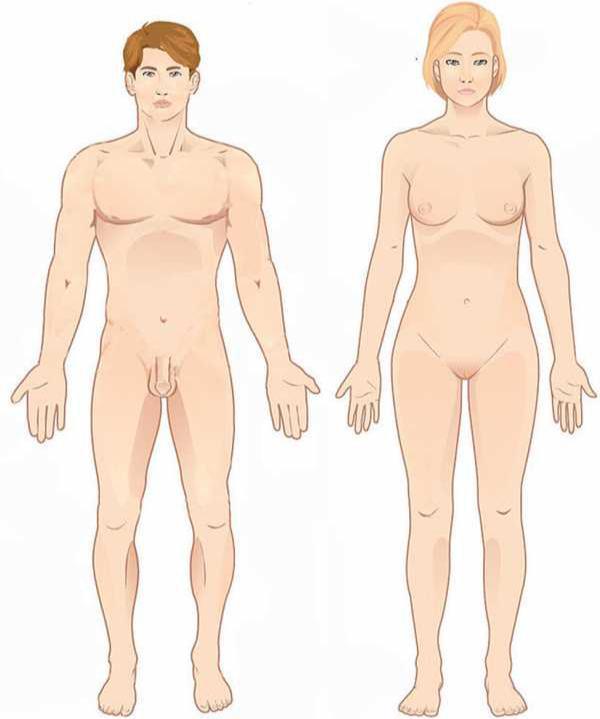 Position anatomique de référence