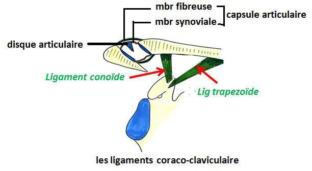 Cours-gratuit-word image 37