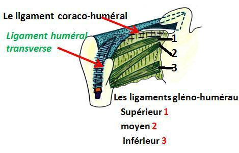 Cours-gratuit-word image 38