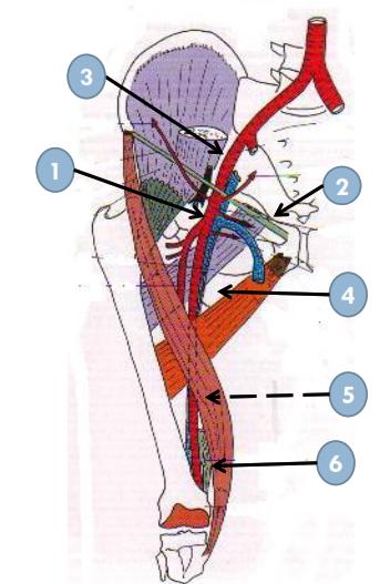 Anatomie descriptive ORIGINE-TRAJET-TERMINAISON