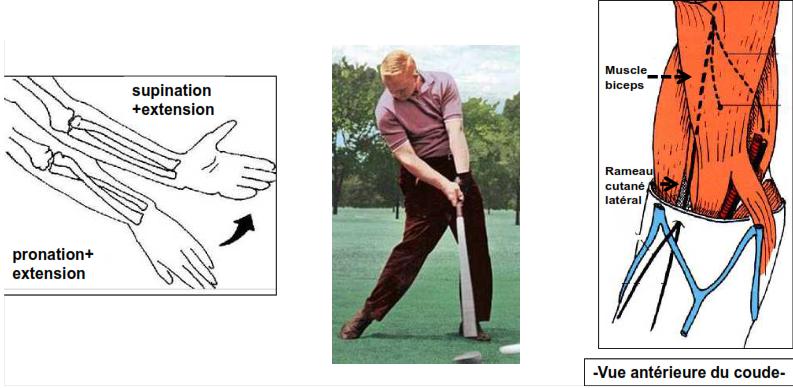 Cours-gratuit-Compression au niveau de l avant bras