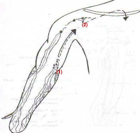 Lymphonoeuds superficiels