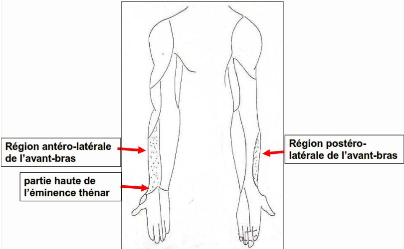 Cours-gratuit-Nerf musculo cutane territoires cutanes sensitifs a l avant bras 1