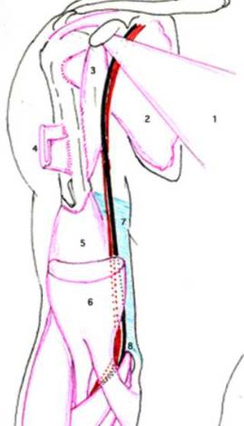 Cours-gratuit-arteres axillaire puis de l artere brachiale