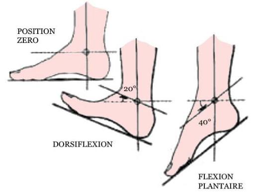 Cours-gratuit-flexion plantaire