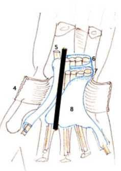 Cours-gratuit-nerf median au poignet 1