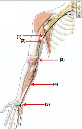 nerf ulnaire