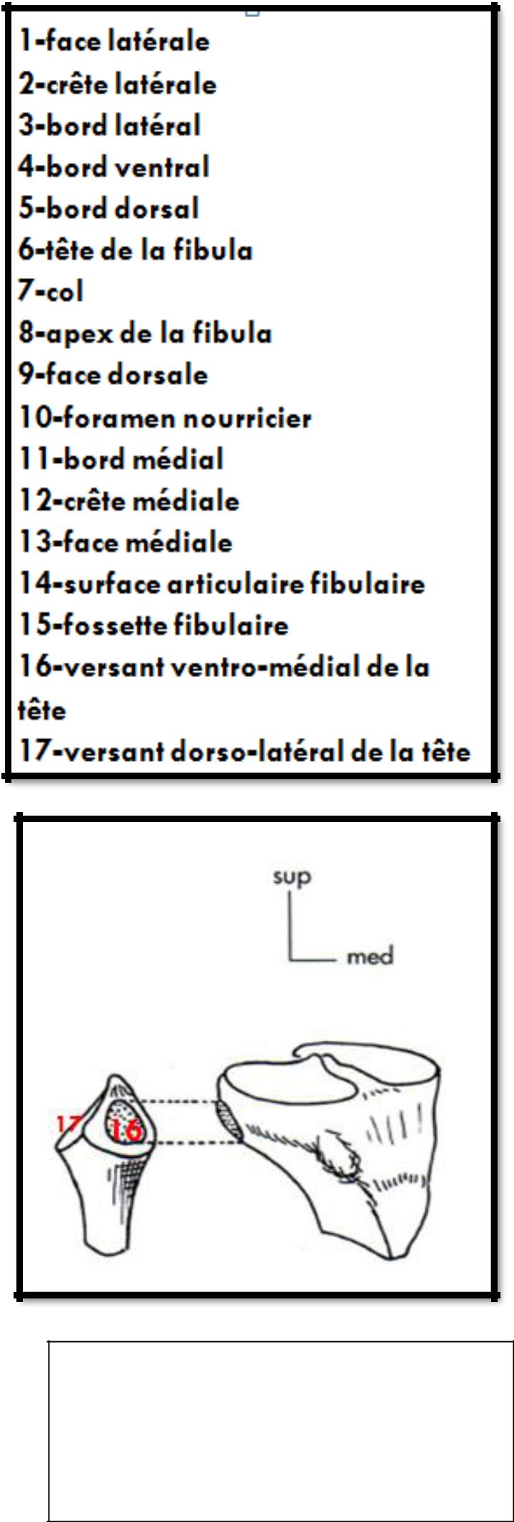 Cours-gratuit-word image 115