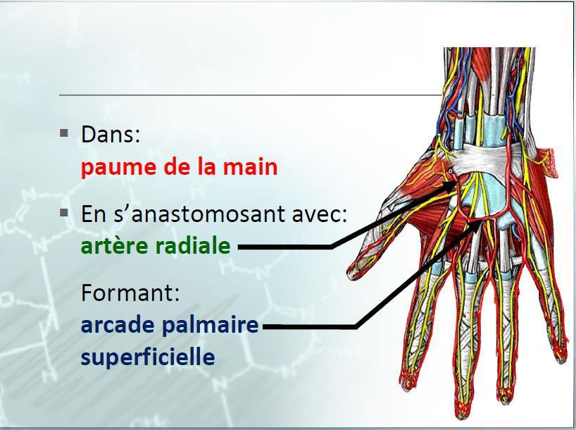 Cours-gratuit-word image 6